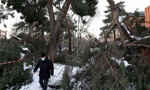 Catástrofe vegetal en Madrid tras el paso del temporal de nieve