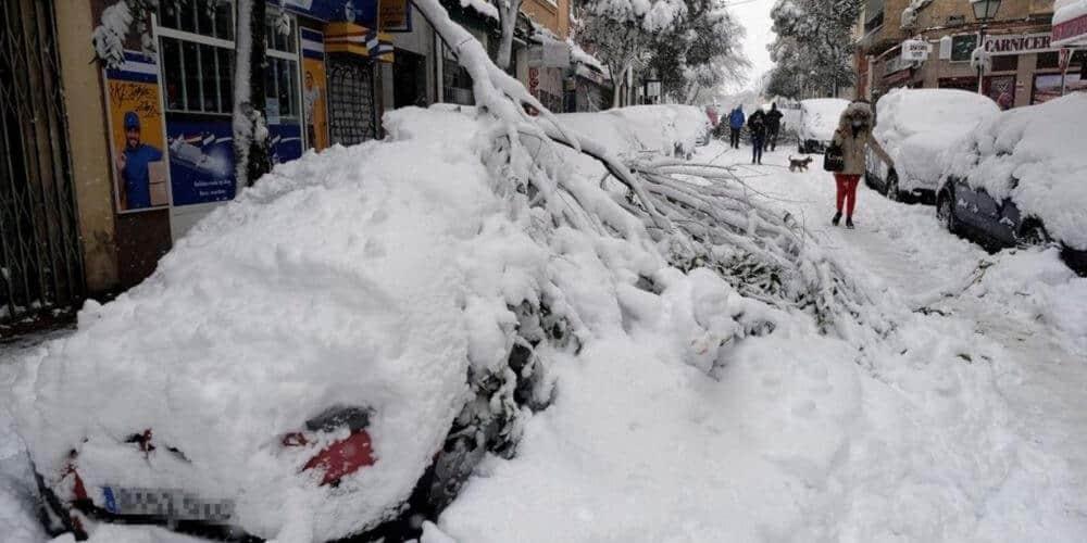 catastrofe-vegetal-en-madrid-tras-el-paso-del-temporal-de-nieve-temporal-filomena-aliadoinformativo.com
